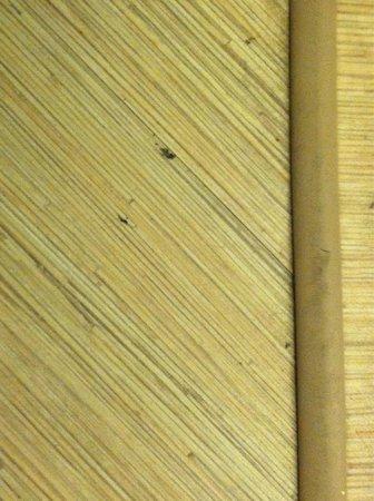 Motel 6 Biloxi Beach: Dirty floor