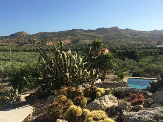 Azienda Agricola Mandranova: view over the olive grove from the pool