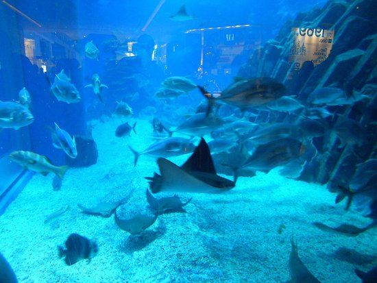 Dubai Aquarium & Underwater Zoo: побывайте,понравится