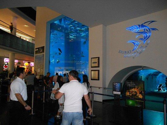 Dubai Aquarium & Underwater Zoo: билеты купить можно при входе
