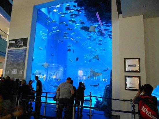 Dubai Aquarium & Underwater Zoo: стеклянная стена