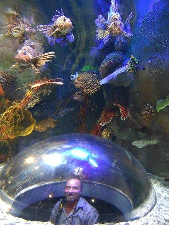 Dubai Aquarium & Underwater Zoo: пёстрые
