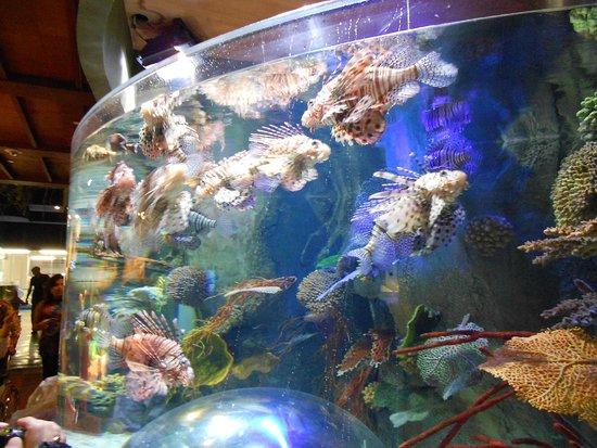 Dubai Aquarium & Underwater Zoo: крылатки