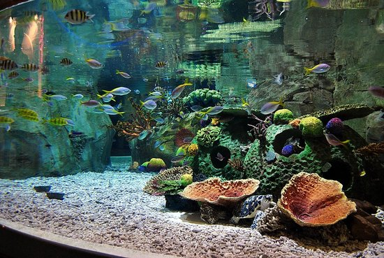 Dubai Aquarium & Underwater Zoo: аквариумы есть большие и маленькие