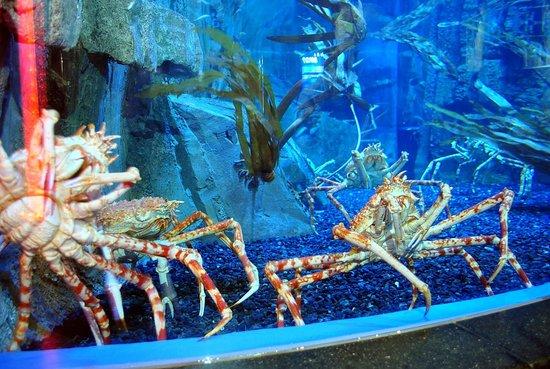 Dubai Aquarium & Underwater Zoo: крабы