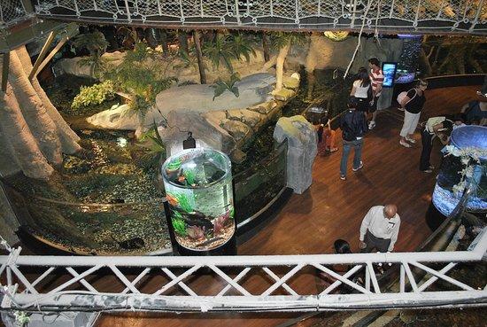Dubai Aquarium & Underwater Zoo: можно и с высоты глянуть