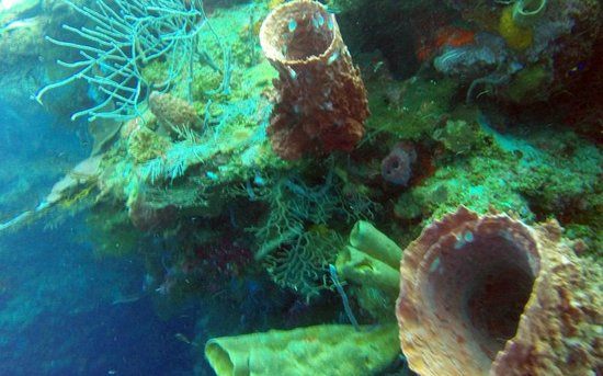 Barefoot Divers Lodge & Dive Center: Sponges