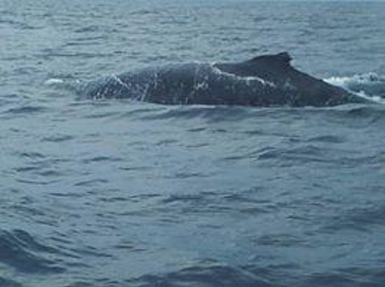 Whales in Paradise - Gold Coast Whale Watching Pty Ltd : They came so close to the boat