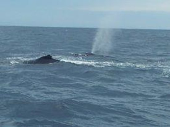 Whales in Paradise - Gold Coast Whale Watching Pty Ltd : Amazing