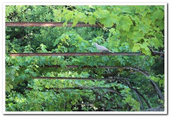 La Farnesine : le jardin