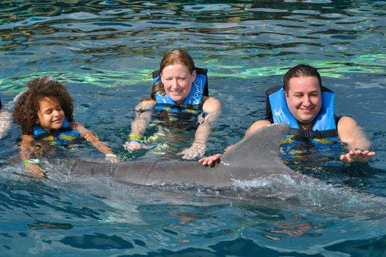 Chankanaab Beach Adventure Park: Swimming with the dolphins.
