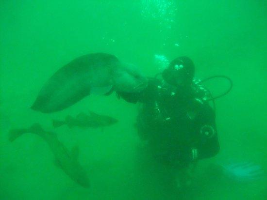Strytan Divecenter : wolf fish , little strytan