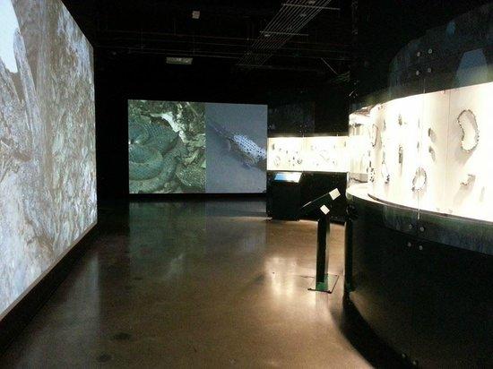 Jade Museum : First floor