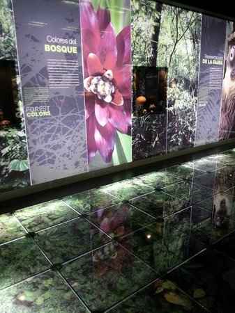 Museo del Jade: Rain forest exhibit