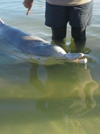 Tin Can Bay Motel: Dolphin feeding