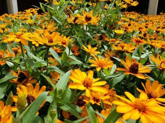 Botanica: The Wichita Gardens: Beautiful....