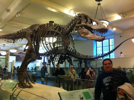 American Museum of Natural History: area dos dinossauros