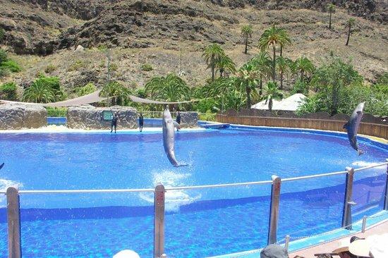 Palmitos Park: dolphins