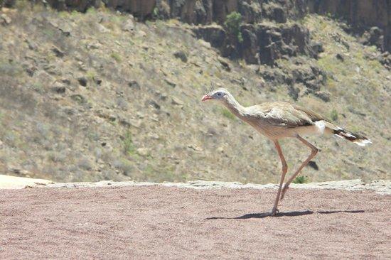 Palmitos Park: exotic birds