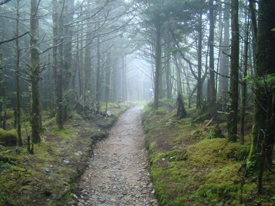 Mount LeConte: Foggy fir forest