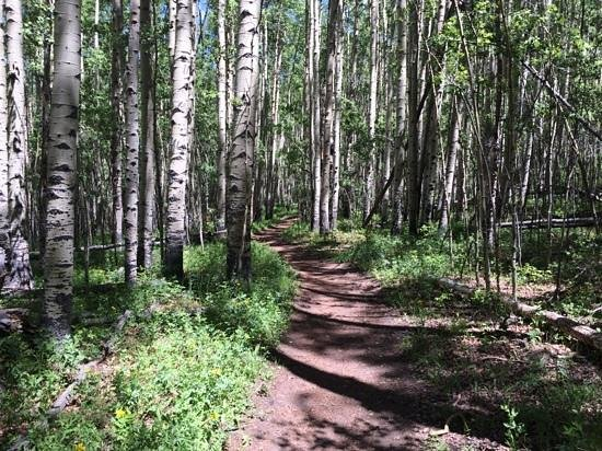 Tumbling River Ranch: merging onto the Colorado Trail