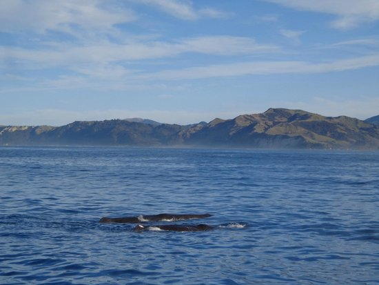Whale Watch : 2 Whales