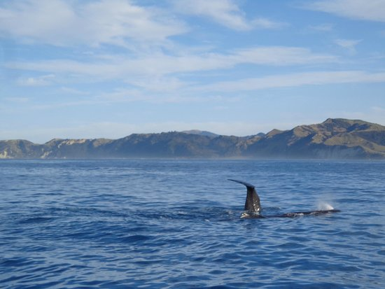 Whale Watch : Whale Tail