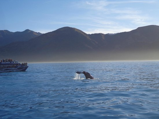 Whale Watch : Diving