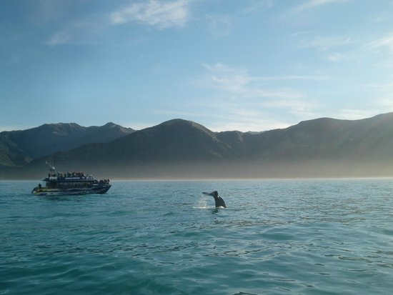 Whale Watch: Tour Boat & Whale