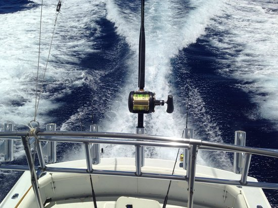 Panoply Sport Fishing & Luxury Charters : Not a bad view from the bridge.