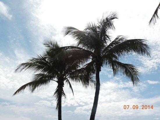 Ocean Sky Hotel & Resort: Palms From The Pool
