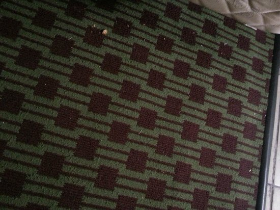 Quality Inn Historic East - Busch Gardens Area: Some of the dirty carpet
