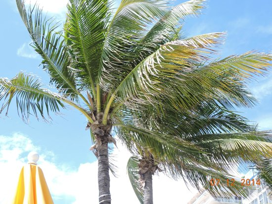 Ocean Sky Hotel & Resort: Palms In The Pool Area