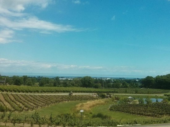 Angels Gate Winery: patio views
