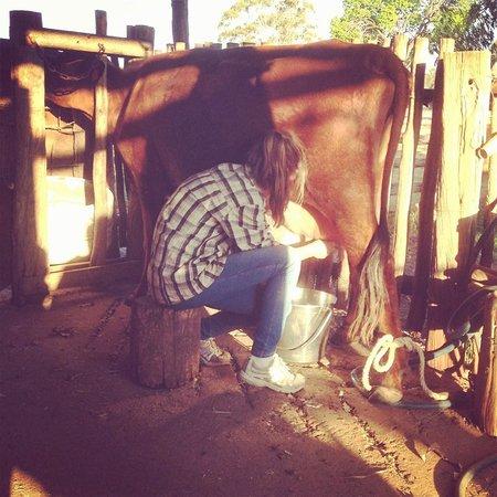 Myella Farm Stay: milking