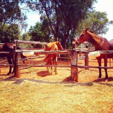 Myella Farm Stay: horse riding