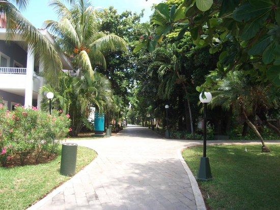 Hotel Riu Playacar: walkway to beach