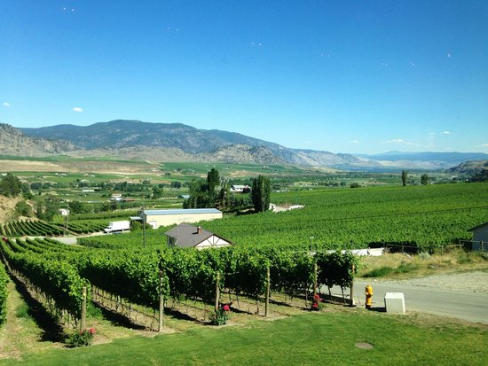 Road 13 Vineyards : View from the tasting room