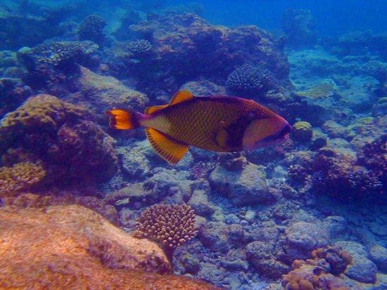 Kurumba Maldives : snorkeling in shallow waters