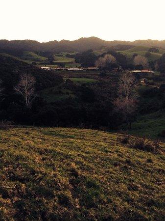 The Farm : View