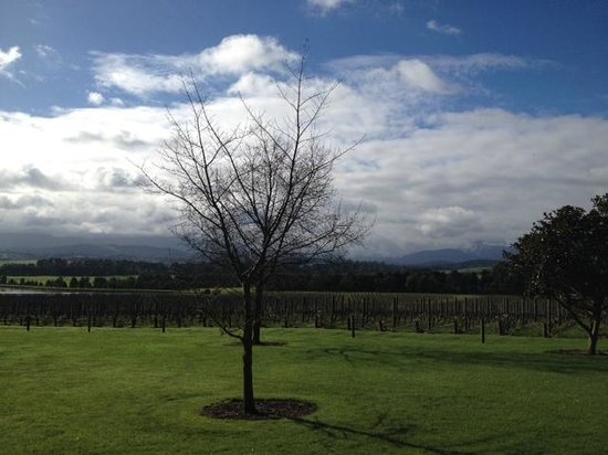 Yarra Valley Wine Tasting Tours : beautiful vineyard