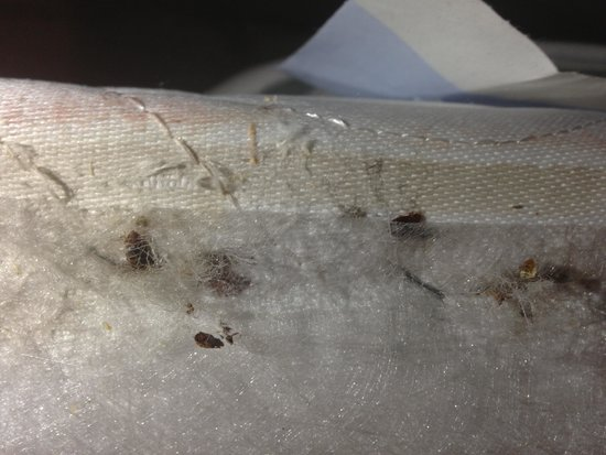 Fort Stockton, TX : Bed Bugs!
