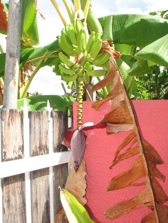 Barefoot Travelers Rooms: Banana Tree