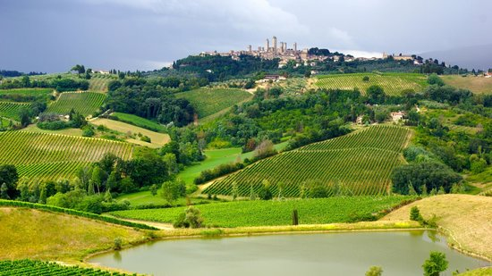 The Best of Tuscany Tour: View from the vineyard!