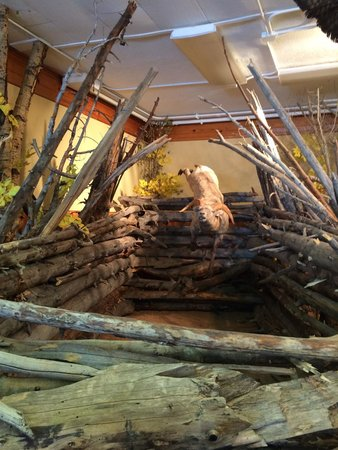 Jackson Hole Museum : Inside museum
