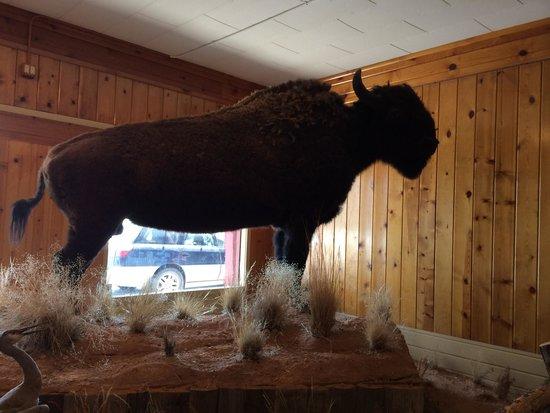 Jackson Hole Museum : Bison