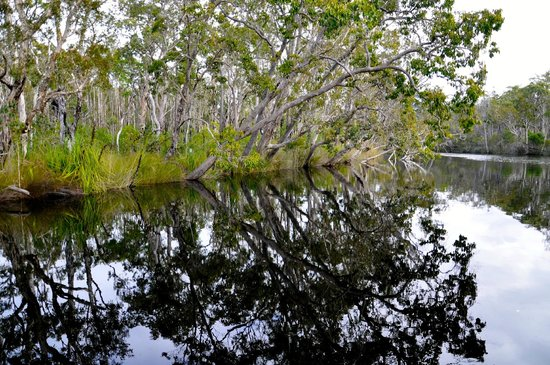 The Discovery Group: In the Everglades
