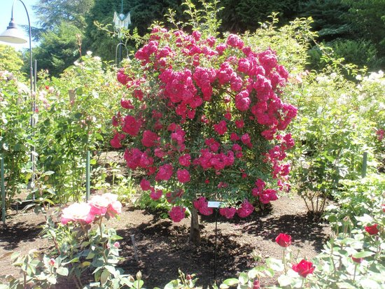 A Rare Variety Of Flowers At Butchart Gardens Picture Of