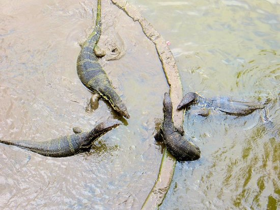 Club Med Bali : Water Lizards