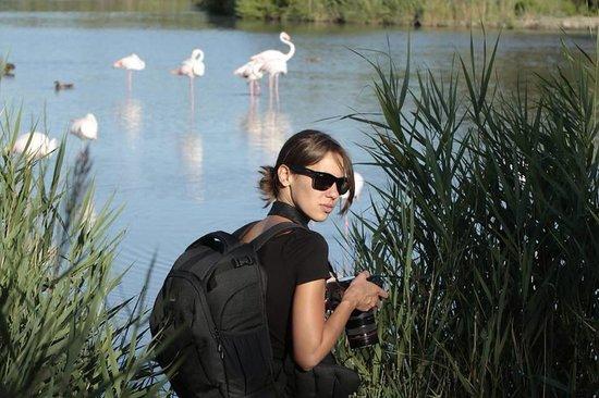 Le Parc Ornithologique de Pont de Gau : A la poursuite des flamands roses